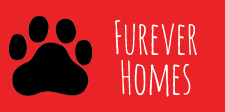 k9-furever-homes