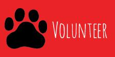 k9-volunteer