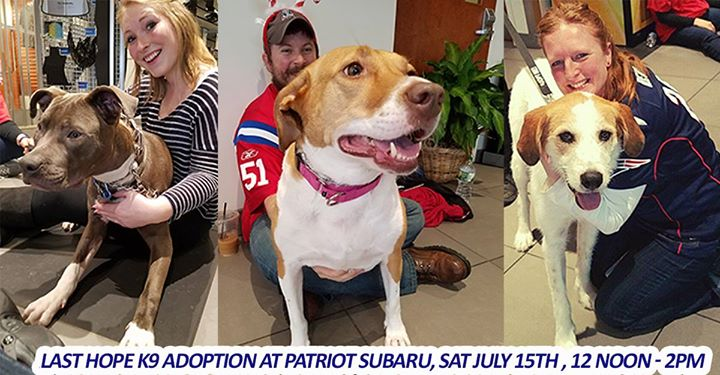 Last hope k9 dog adoption at patriot subaru n attleboro last last hope k9 rescue will be here with wonderful adoptable dogs for you to meet and greet every animal deserves to know love and you just might find your m4hsunfo