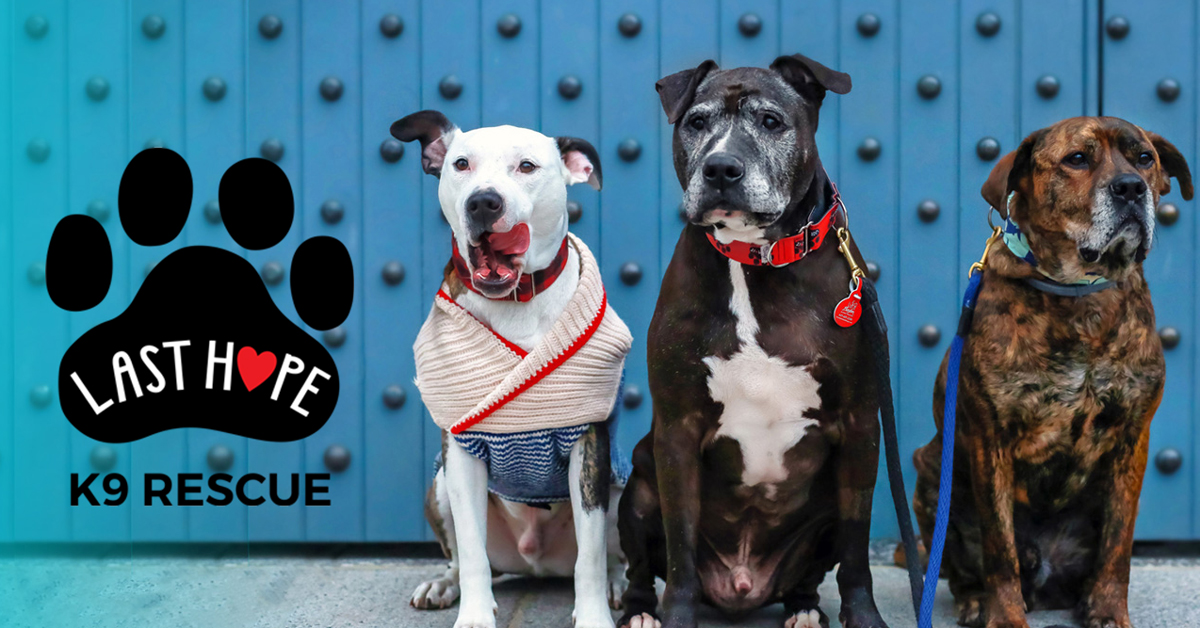 Adoptable Dogs - Last Hope K9 Rescue