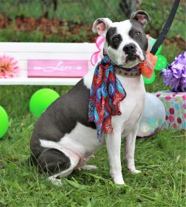 Meet Adoptable Dog Rowan